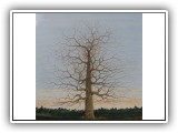Winter Tree 17 - 60x60